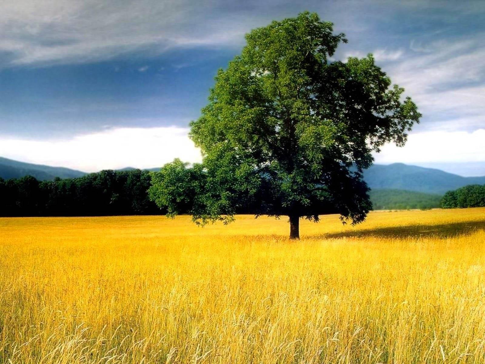 Tree+In+Field+Wallpapers+6